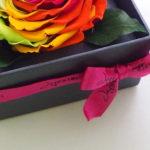 rainbow_rose_e
