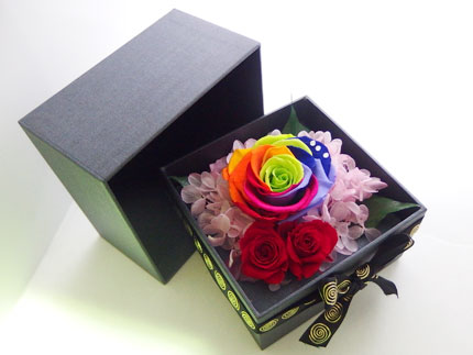 rainbow_rose_r